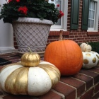 gold and white pumpkins 4
