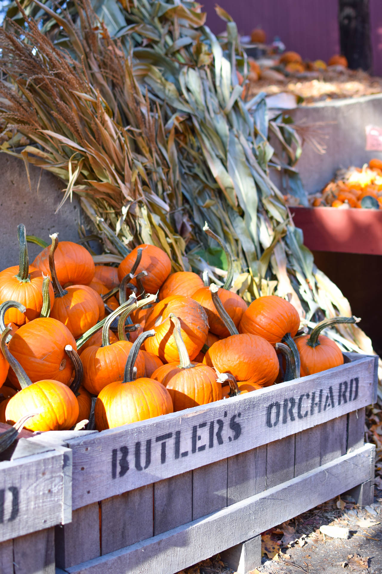 butlers orchard review