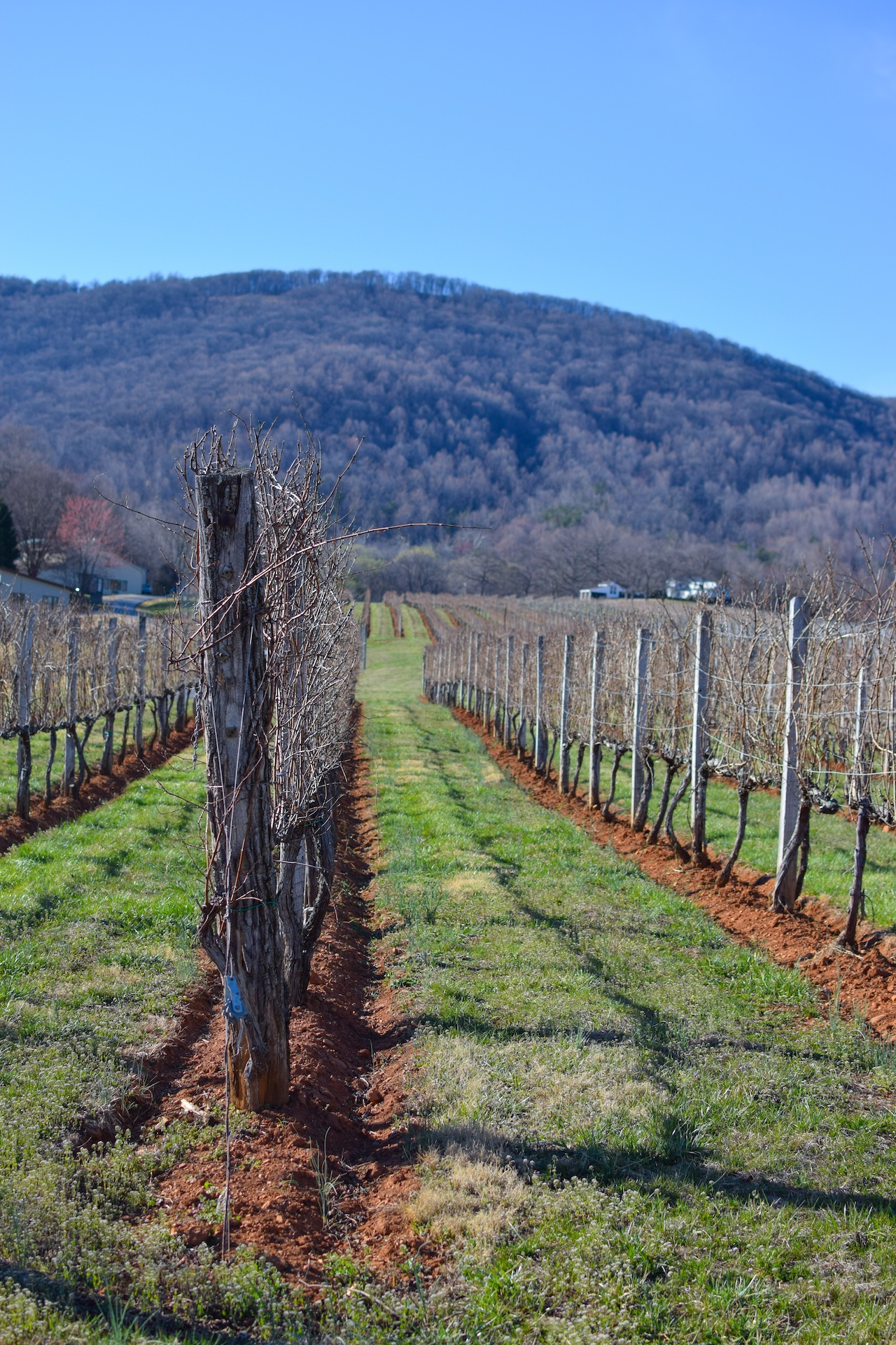 acton mountain vineyards review